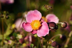 Guerra a las alergias